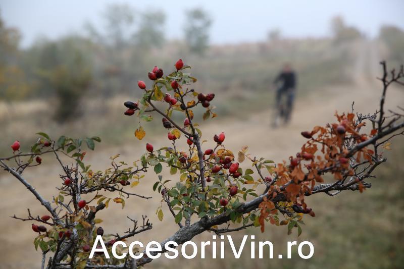 Turul Ciclist Dealu Mare - octombrie 2013